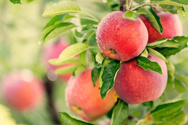 Por tus frutos te conocerán